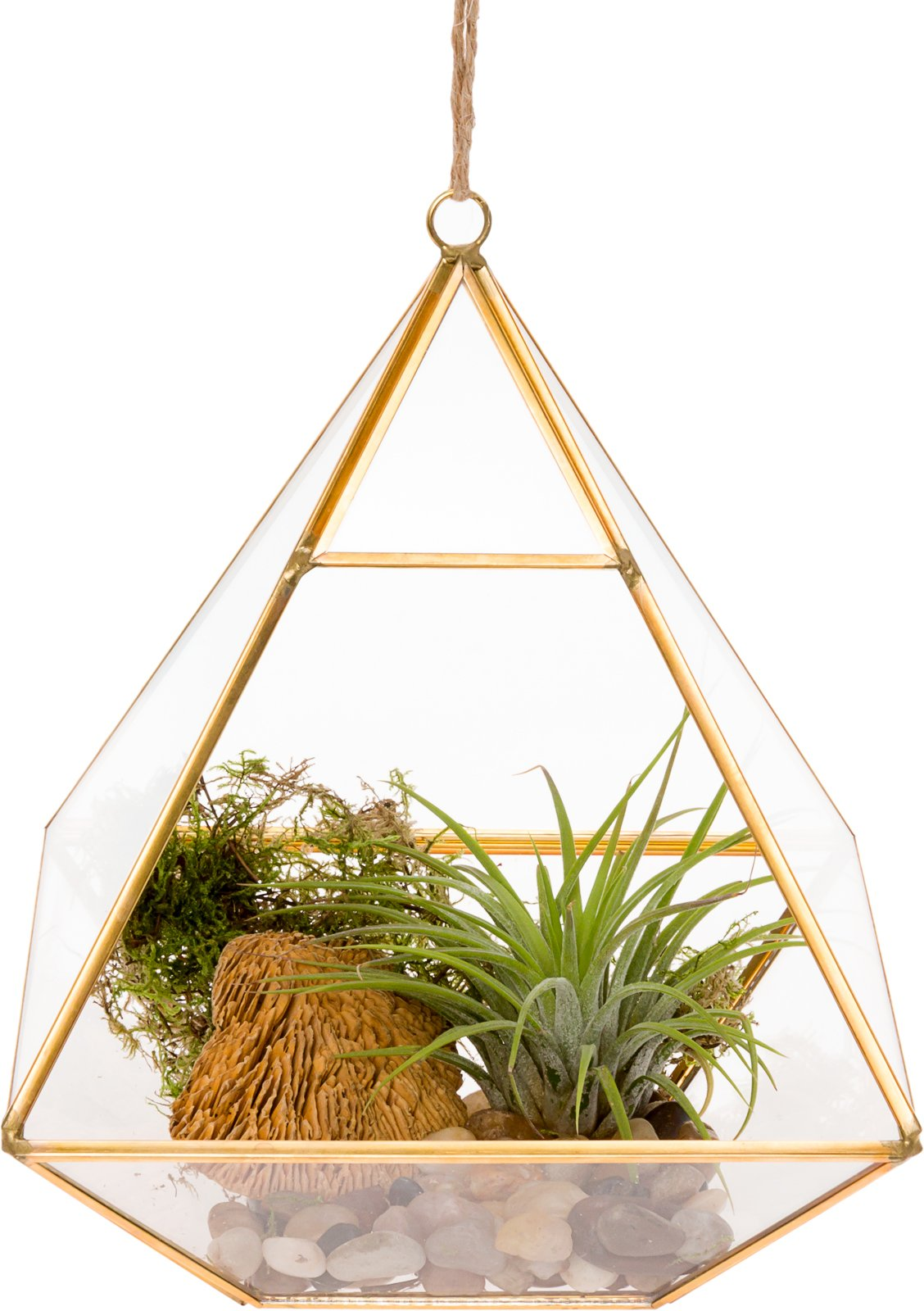 Mindful Design Glass Terrarium - Geometric Diamond Desktop Garden Planter by (Gold)