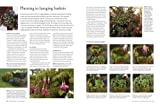 How to Propagate 375 Plants: A Practical Guide to