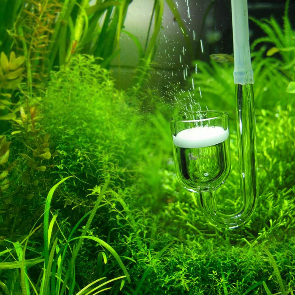 Amazon com : Rhinox Nano CO2 Diffuser - Keeps Aquarium Plants