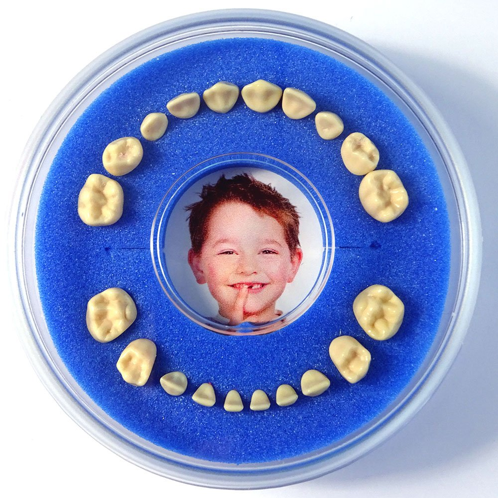 Firsty Baby Tooth Box Round || (blue, boy) Free Tooth Event Sticker, Ships every Friday