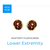 Anatomy flashcards: Lower Extremity: Learn all cadaveric, bones, muscles, veins and arteries on the go (Kenhub…