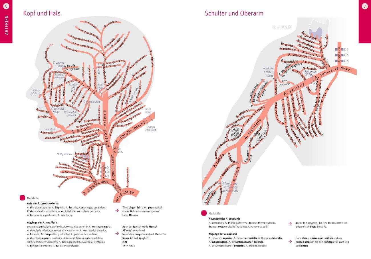 Anatomische Tafeln: Arterien, Venen, Lymphgefäße, ZNS & Hirnnerven ...