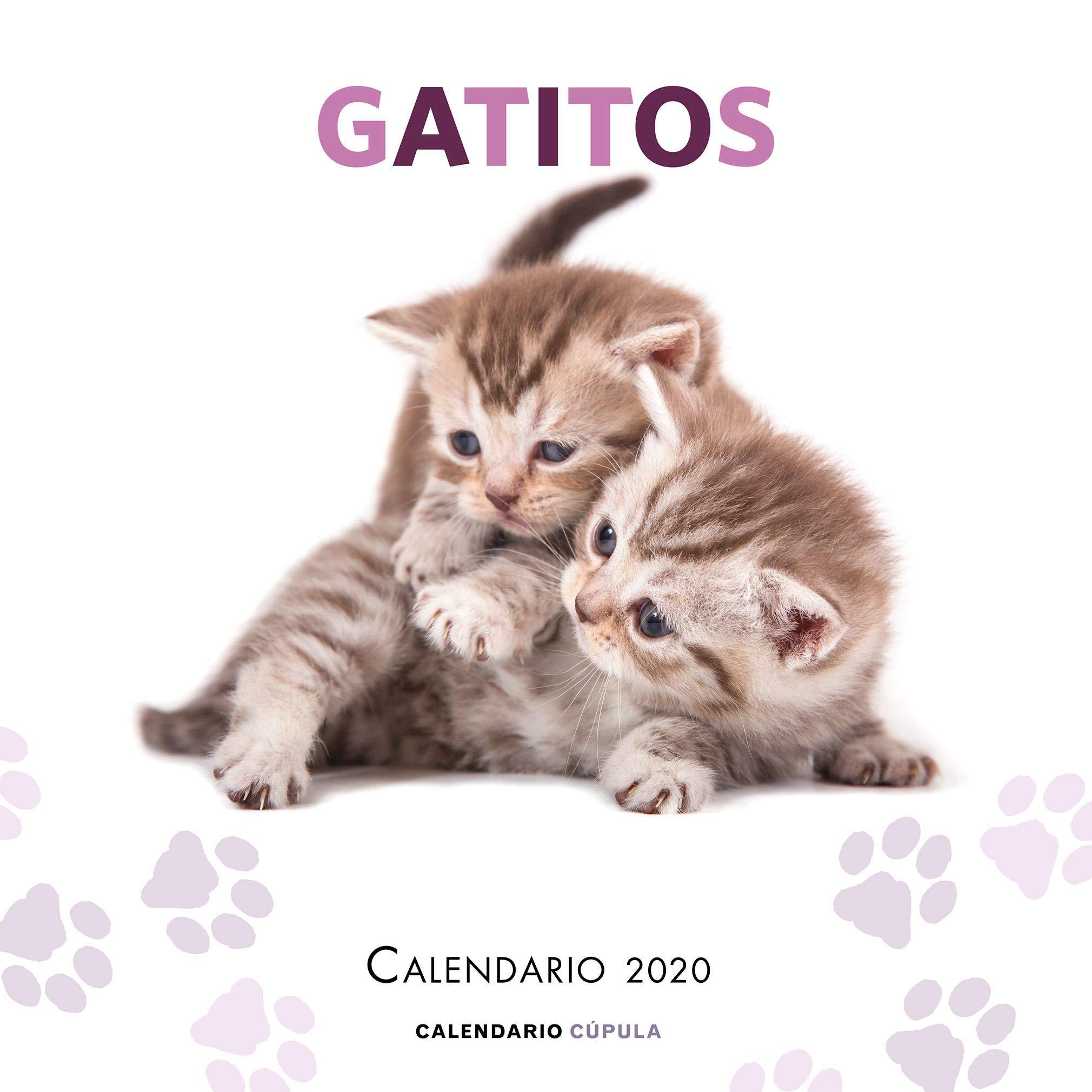 Calendario Gatitos 2020 (Calendarios y agendas): Amazon.es: AA. VV ...