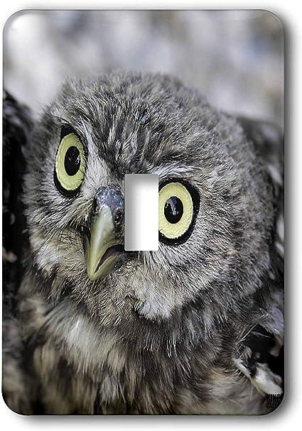 3drose Llc Lsp 9929 1 Little Owl Athena Noctua Aragon Spain Europe 4 Single Toggle Switch Switch Plates