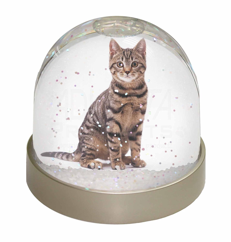 Advanta Brown Tabby Cat Snow Dome Globe Waterball Gift, Multi-Colour, 9.2 x 9.2 x 8 cm Advanta Products AC-154GL
