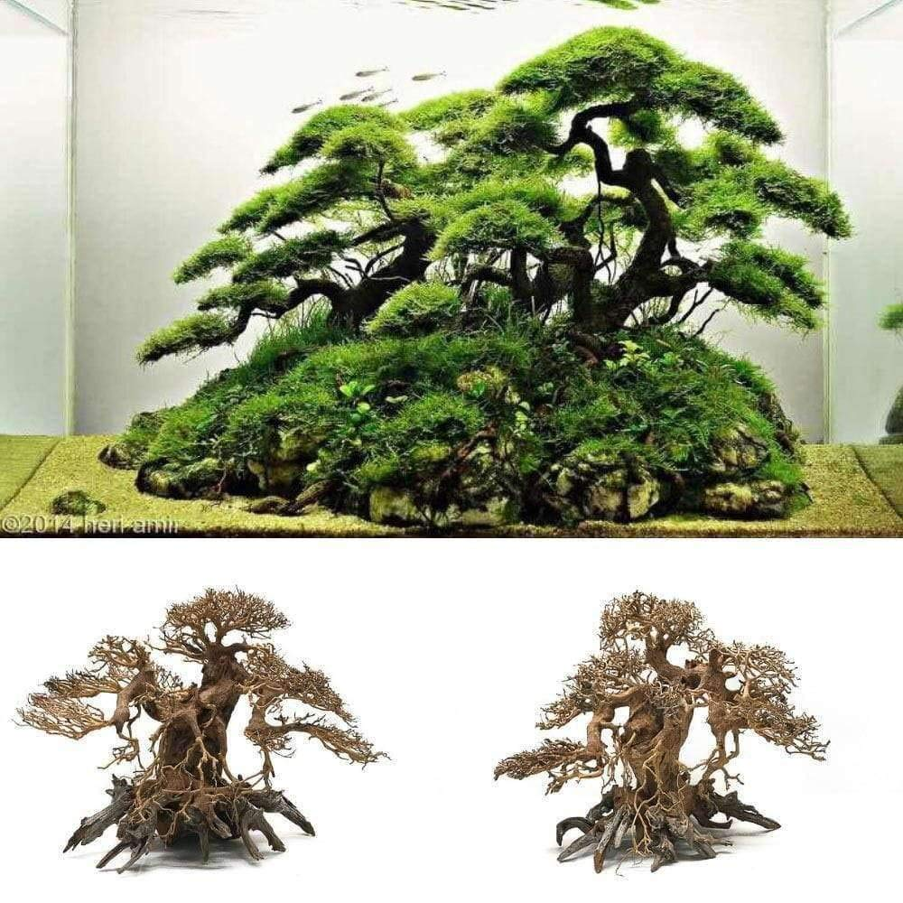 Sagar Aquarium Driftwood Banyan Tree Shape Wood Bonsai Tree For Fish Aquarium Planted Aquascape Freshwater 11 Inch Height Upto 30 X 30 X 15 Cm Amazon In Pet Supplies