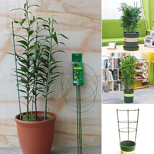 Pepino Torre, plantas de cultivo de Torre maxitom, con Rank ayuda ...