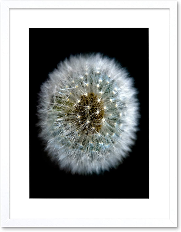 DANDELION SEEDS BLOOM FLOWER BLACK FRAME FRAMED ART PRINT PICTURE MOUNT B12X9682
