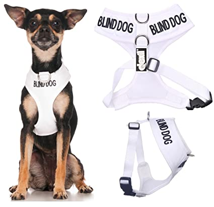 Amazon.com : BLIND DOG (Dog Has Limited/No Sight) White Color Coded