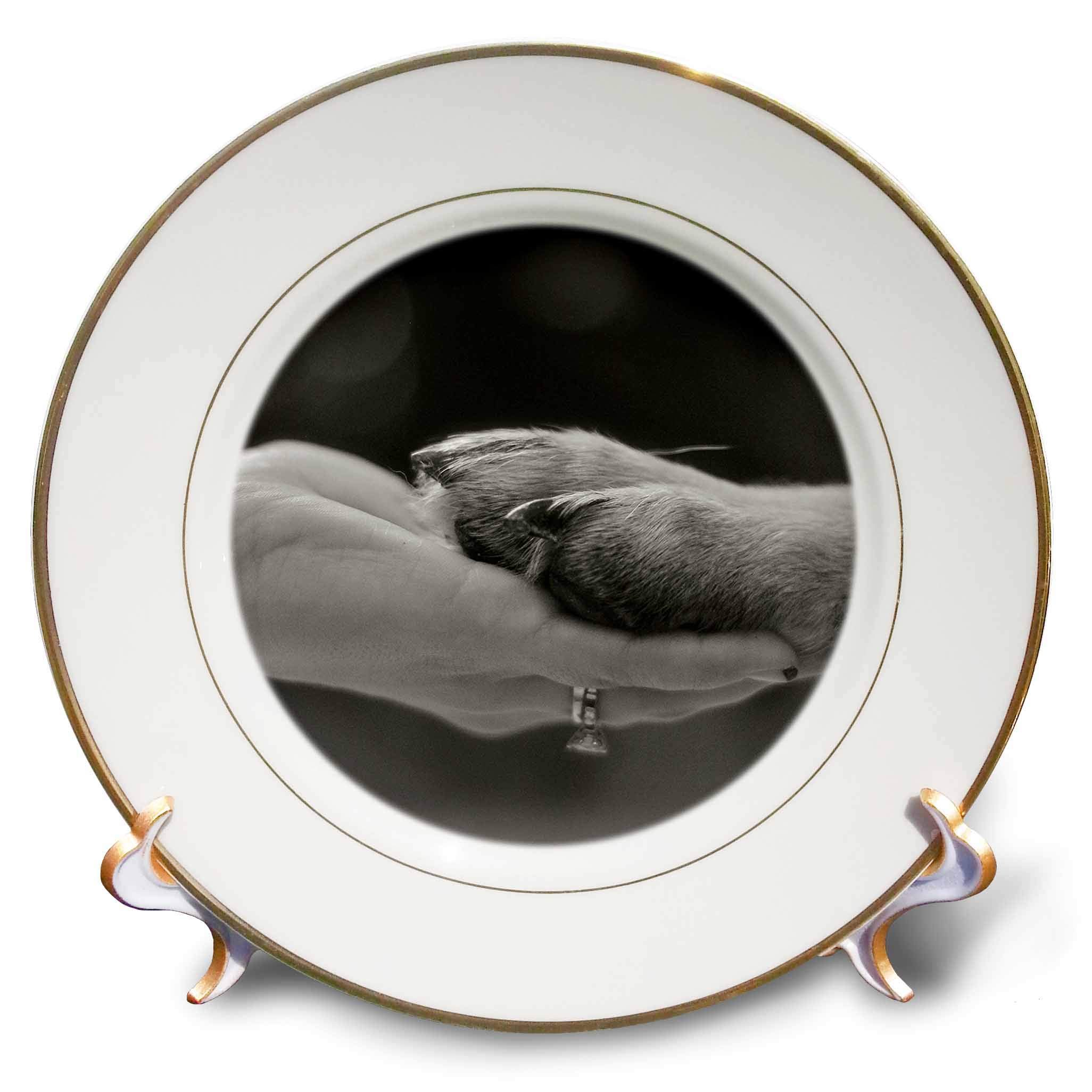 3dRose Stamp City - Animals - Black and White Photo of German Shepherd Holding Hands with its Human. - 8 inch Porcelain Plate (cp_293526_1)
