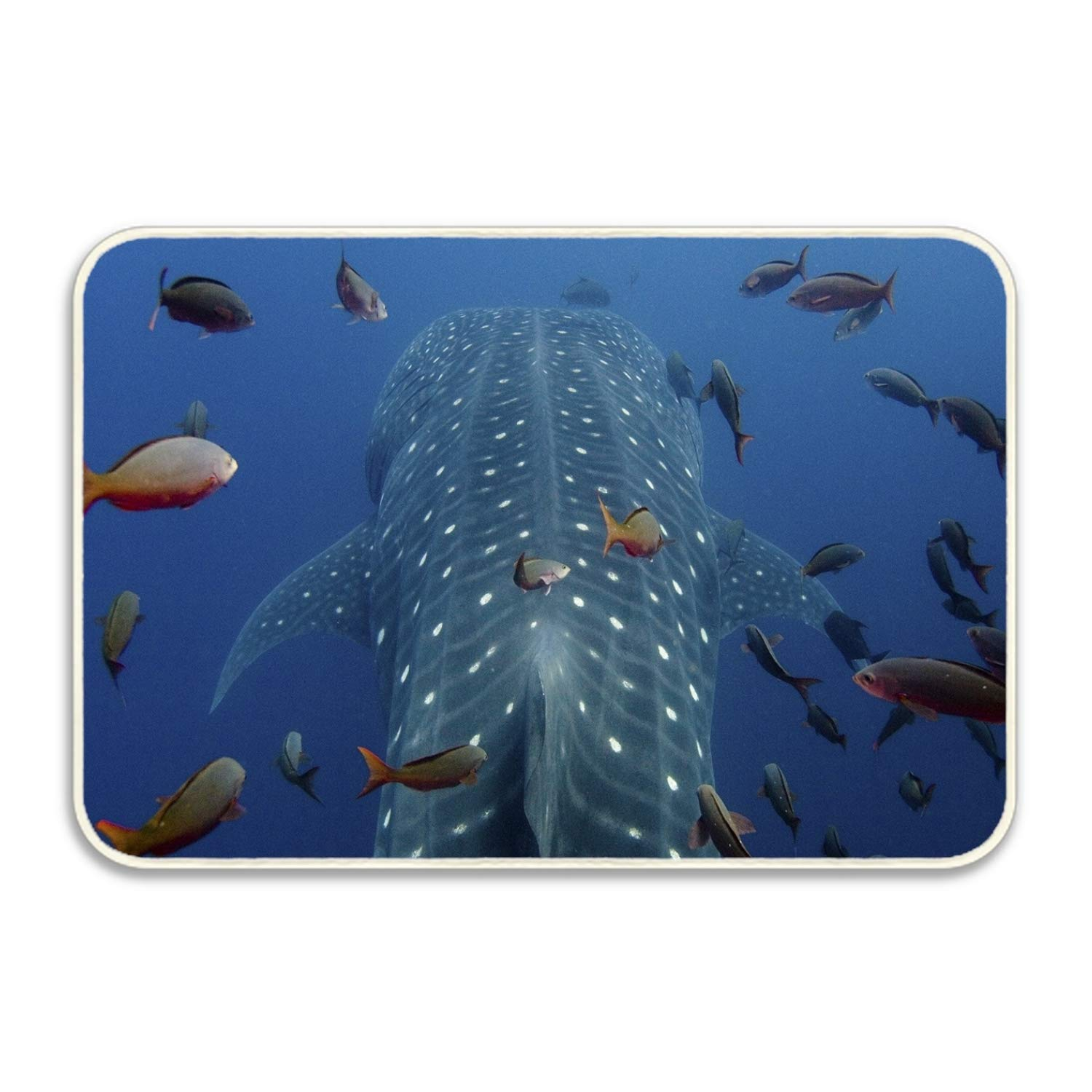 Amazon.com : Cecil Beard Animal Whale Sharks Inspirational ...