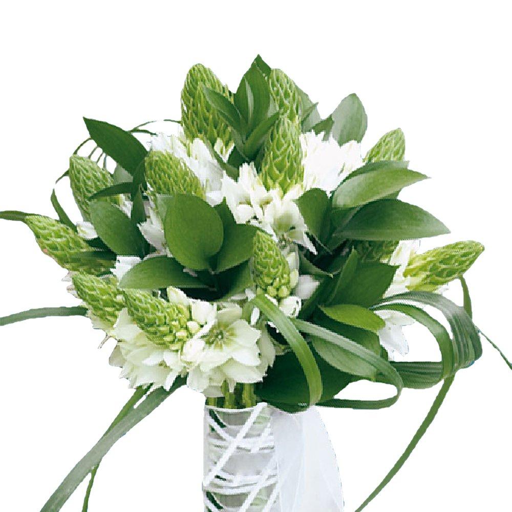 Amazon Globalrose 180 Blooms Of Star Of Bethlehem 20 Stems