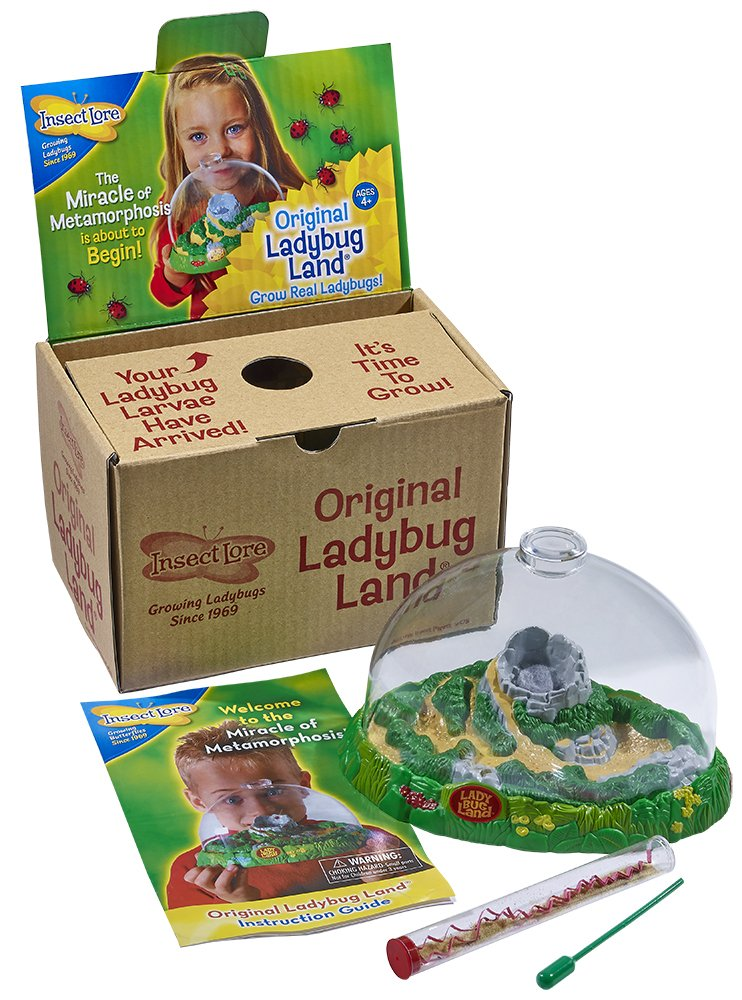 Insect Lore Live Ladybug Growing Kit Toy - Baby Ladybug Larvae to Adult Ladybugs -SHIP NOW Insect Lore Dropship 02122