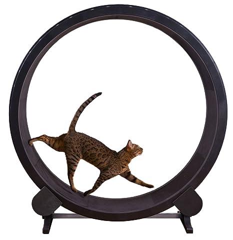Un gato rápida Ejercicio rueda