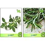 Creative Farmer Thyme English Winter and Rosemary Herb Seeds - Pack of 20