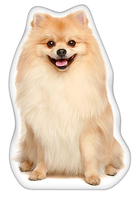 Amazoncom Ileesh Pomeranian Shaped Pillow Pet Supplies