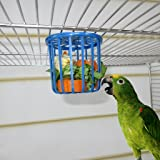 Can foraging toys for parrots are