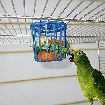 Girasool - 1 Unidad de Jaula para pájaros y Loros para Frutas ...