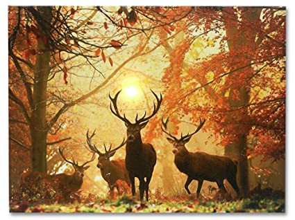 Amazon.com: Deer Picture - LED Big Buck Wrapped Canvas Print - White ...
