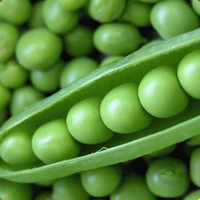 Verazui 1/4 Lb Lincoln Shell Garden Pea Seeds - : Garden & Outdoor