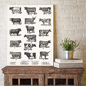 Breeds of Cow Canvas Poster Farmhouse Wall Art Print Types of Cattle Painting Vintage Picture Dairy Poster Barn Wall Art Decor 16x24in Unframed