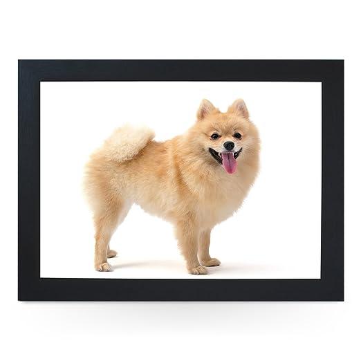 Pomerania perro. Alta calidad puf de Botánica. l0124 (negro ...