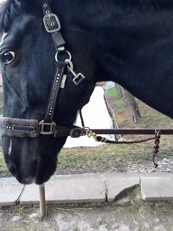 anbinde Cuerda Pony Pfiff/ /Correa Trenzada para Caballo en dise/ños Diferentes de stylischen Designs Burro /Ramal para Caballo/ Cabra Cuerda para
