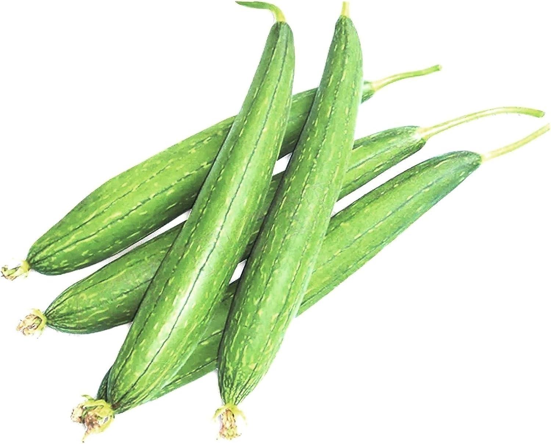 Amazon Com Kitchen Gardening Vegetable Seeds Istoredirect Sponge Gourd Goshali Ghiya Tori Kitchen Dining