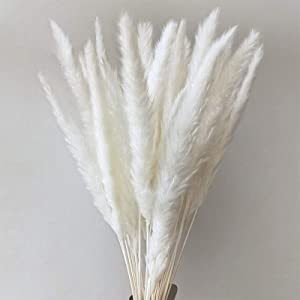 60 Pcs Natural Pampas Grass Dried Reed Plumes Phragmites Flowers Bouquet Decoration for Home Living Room,Wedding Flower Bunch Decor ,Photography Hotel (58-60CM) (Natural White, 60)