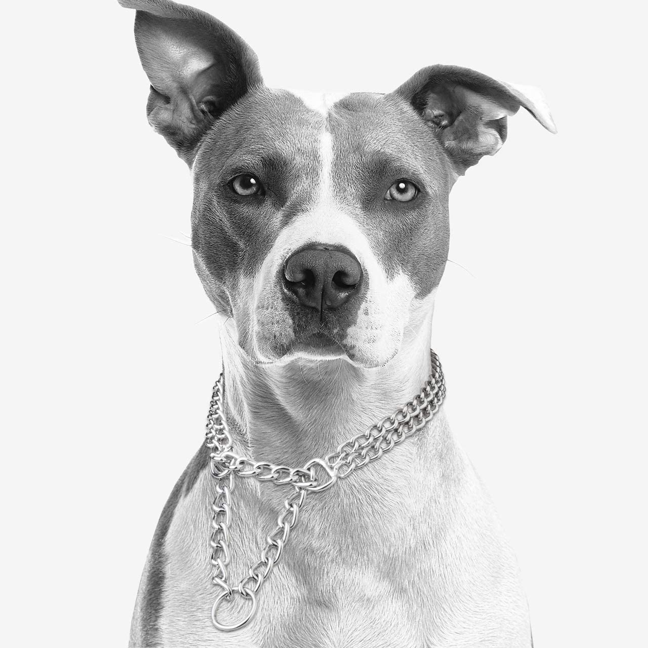 Mogoko Stainless Steel Double Chain Martingale Dog Collar Metal Dog Choker Chain Collar for Pet Training