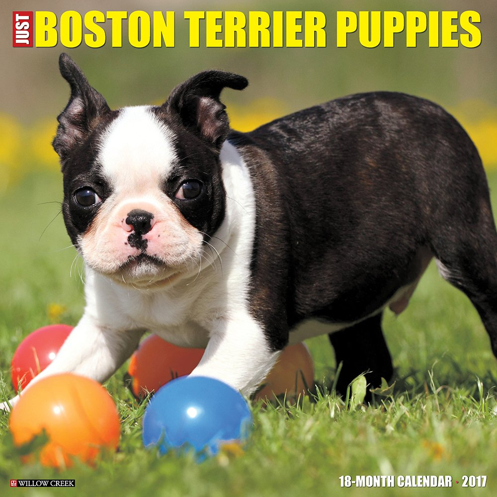 Just Boston Terrier Puppies 2017 Wall Calendar (Dog Breed Calendars) ebook