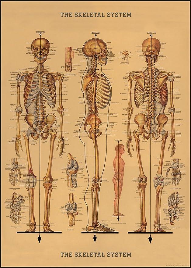 "Cavallini Geschenkpapier ""Skelett"": Amazon.de: Bürobedarf ..."
