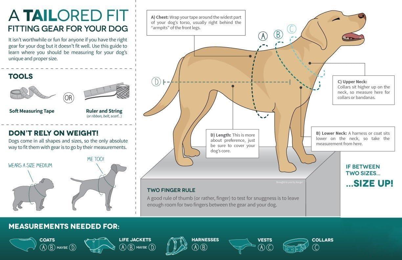 Kurgo Go-Tech Adventure - Arnés para Perro: Amazon.es: Productos ...