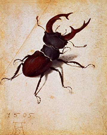 Antique Beetle Vintage Variety Of Insects All Chart Fabric Poster Decor H-132