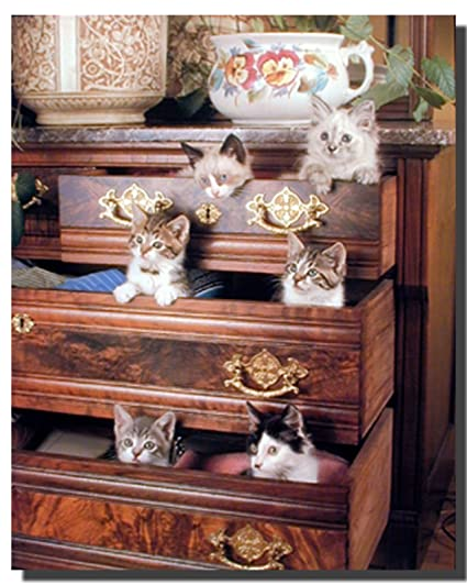 Image result for cats in drawers