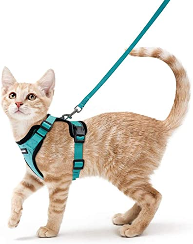 rabbitgoo-Cat-Harness-and-Leash-for-Walking