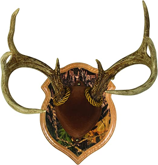 Wooden base shield taxidermy trophy Mounting Plaque OAK  WALNUT 5B