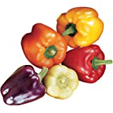 Burpee Carnival Mix Sweet Pepper Seeds 100 seeds