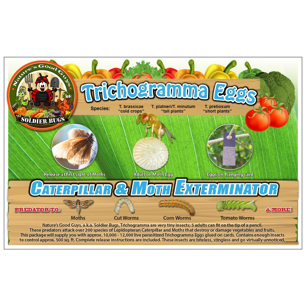 Bug Sales Caterpillar & Moth Exterminator- Trichogramma 30 Squares/ 100,000 Eggs by Bug Sales