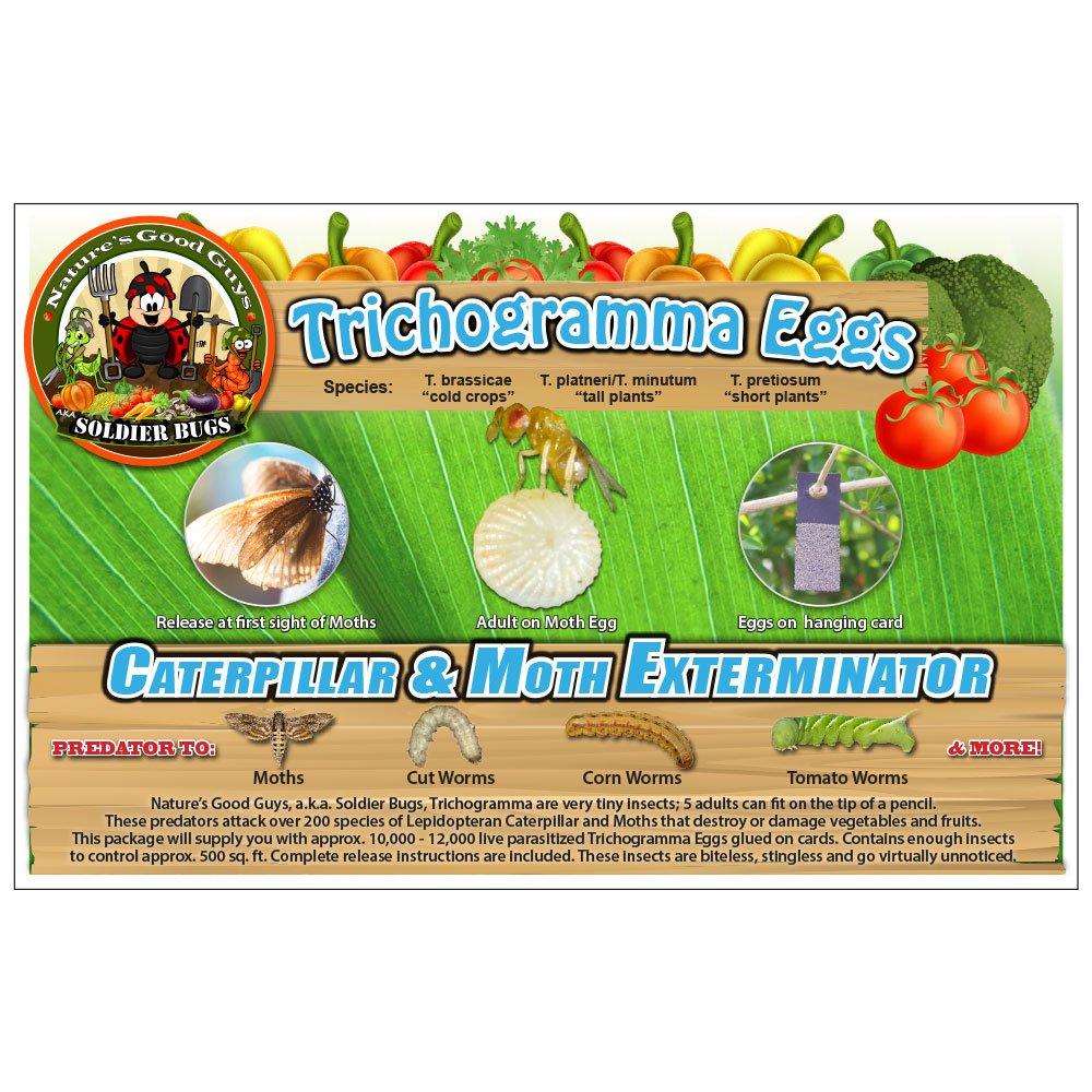Bug Sales Caterpillar & Moth Exterminator- Trichogramma 30 Squares/ 100,000 Eggs