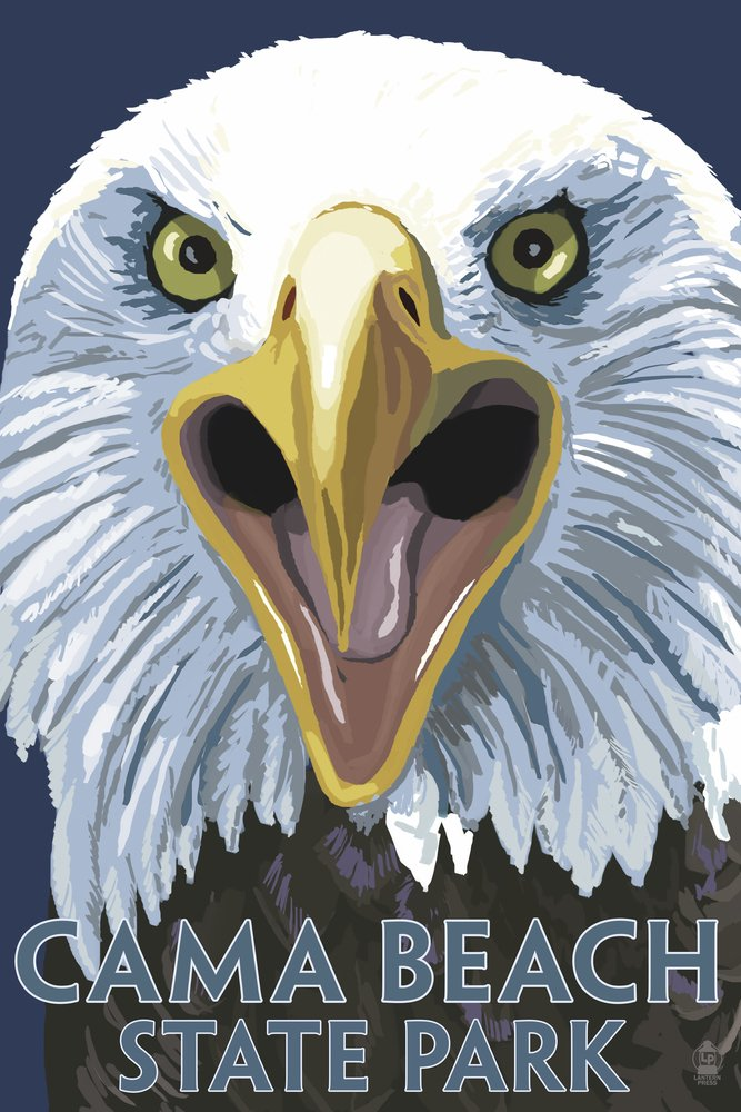 Camaビーチ状態公園、ワシントン – Eagle Up Close 36 x 54 Giclee Print LANT-48366-36x54 36 x 54 Giclee Print  B017E9XH6I