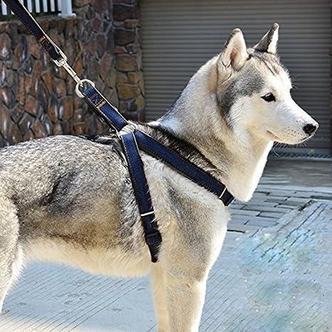 E. vida perro arnés correa, ajustable y no-pull correa Set & Heavy ...