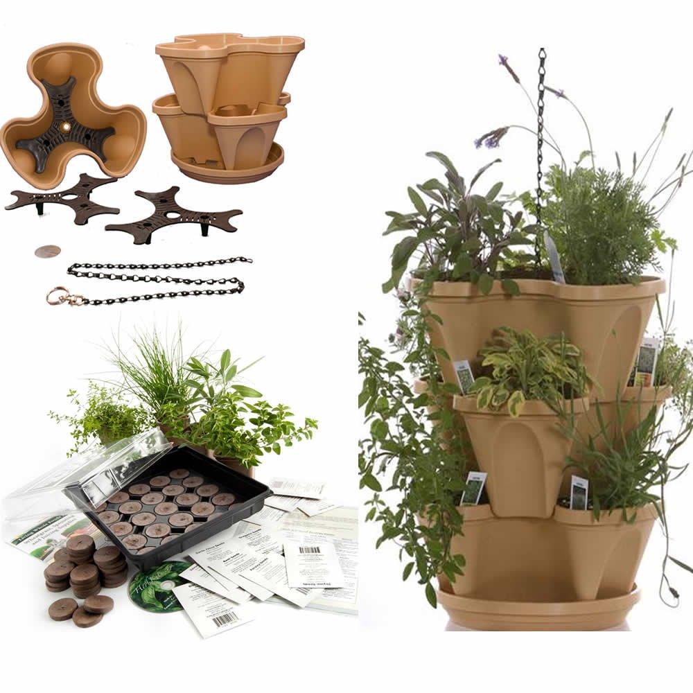 Medicinal Herb Starter Kit