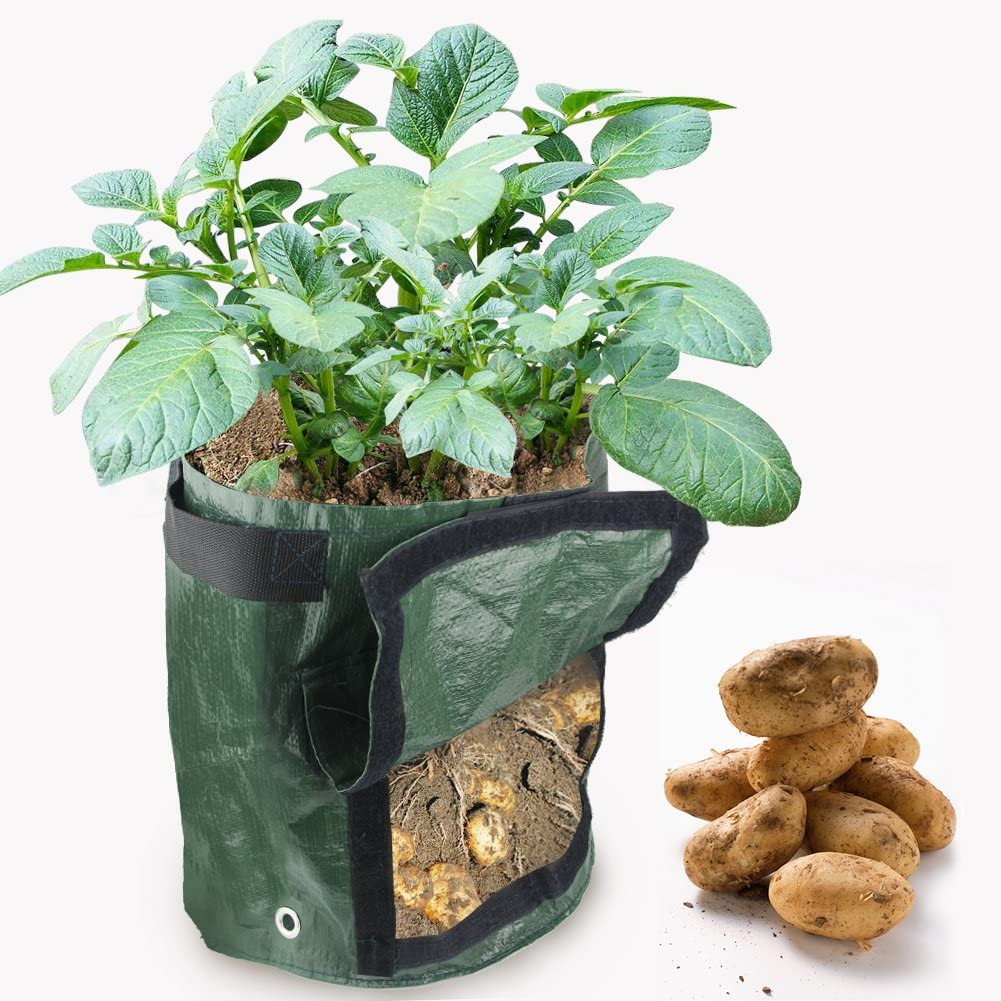 HTINAC 2 unidades Planta Patata, Maceta de Cultivo de Patata ...