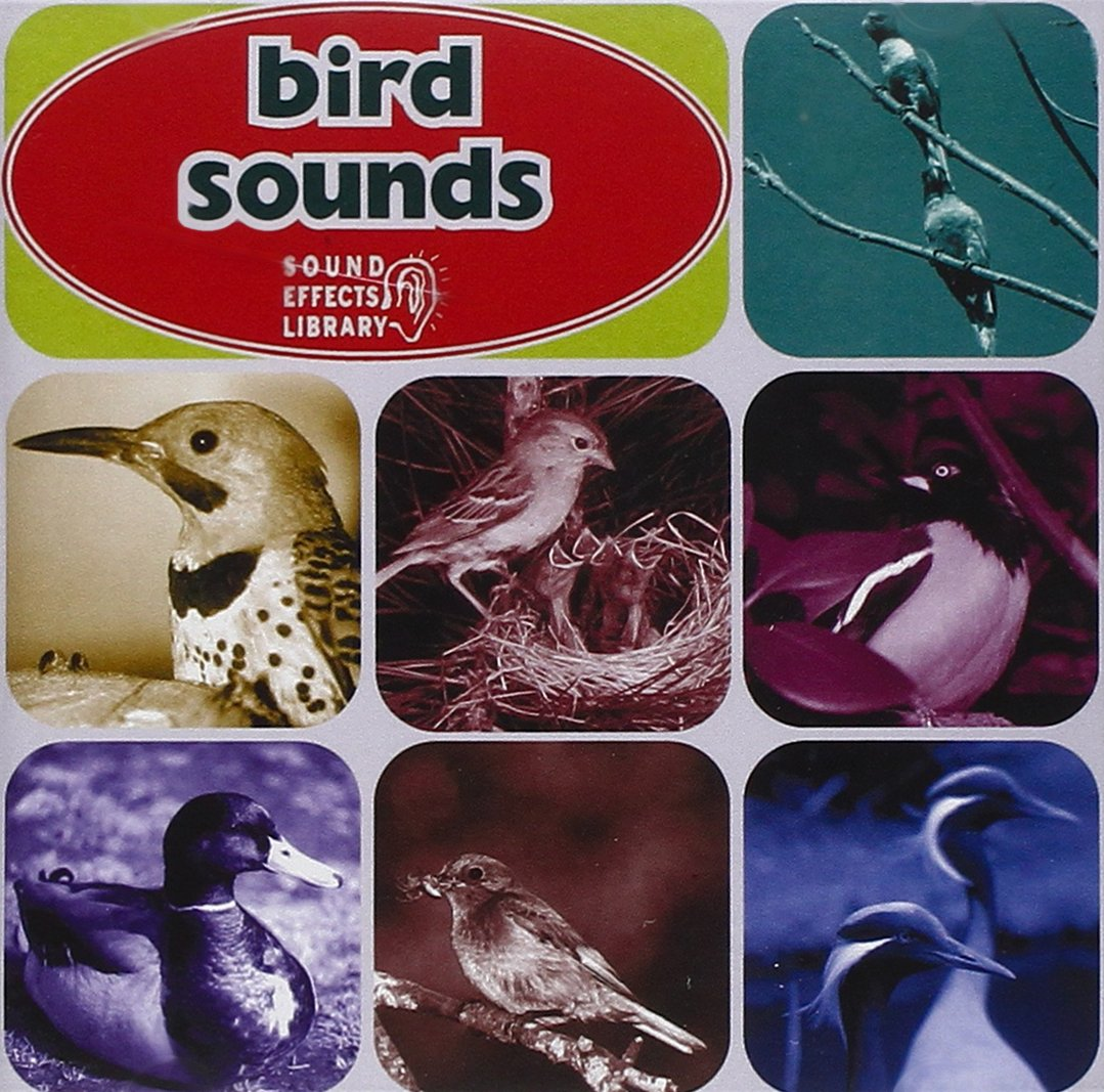 Bombing new Challenge the lowest price of Japan ☆ work Bird Sounds