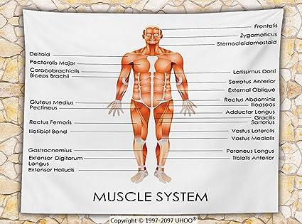 Amazon Human Anatomy Fleece Throw Blanket Muscle System Diagram