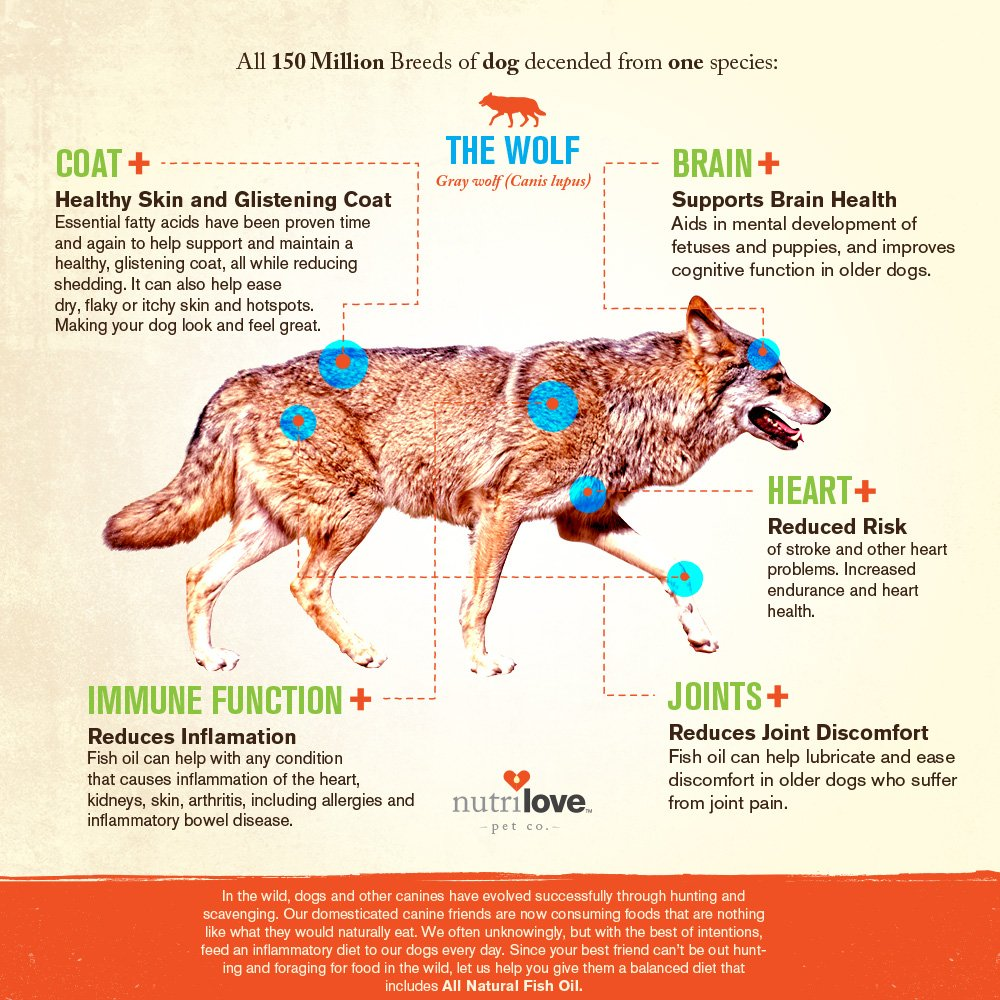 Is fish oil good for dogs dry skin for How much fish oil should i give my dog