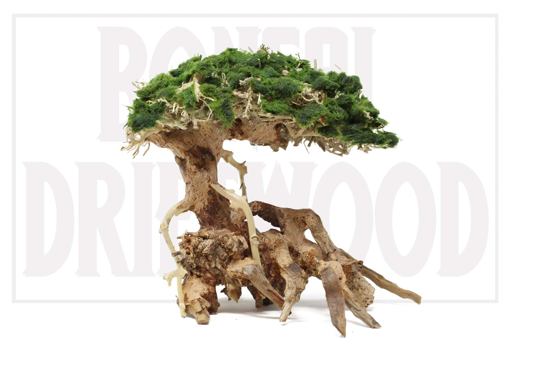 Bonsai Driftwood Aquarium Tree On Rock 8 Inch Natural Easy To Install Handcrafted Fish Tank Decoration Stabilizes Environments Helps Balance Water Ph Levels Wood