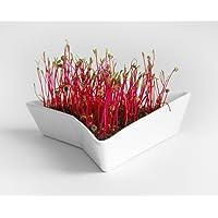 Mr. Sprouty Premium Set: Keramik Keimgerät + Sprossen Samen (5g) + Filzhut; für Sprossenzucht, Intelligentes Design, Einfache Bedienung, Innovative Form, Hochwertige Materialien