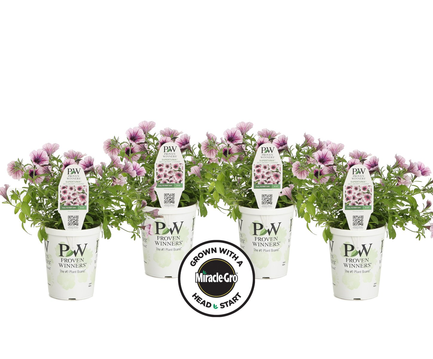 4-pack Proven Winners Supertunia Mulberry Charm Grown with Miracle-Gro Head Start Fertilizer (Petunia) Live Plant, Light Pink Flowers with Dark Pink Veins, 4.25 in. Grande
